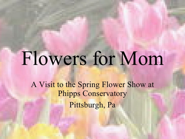 Flowers for Mom A Visit to the Spring Flower Show at Phipps Conservatory Pittsburgh, Pa