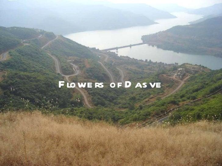 Flowers of dasve