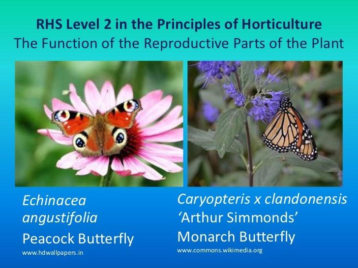 Flower structure, pollination, fertilization