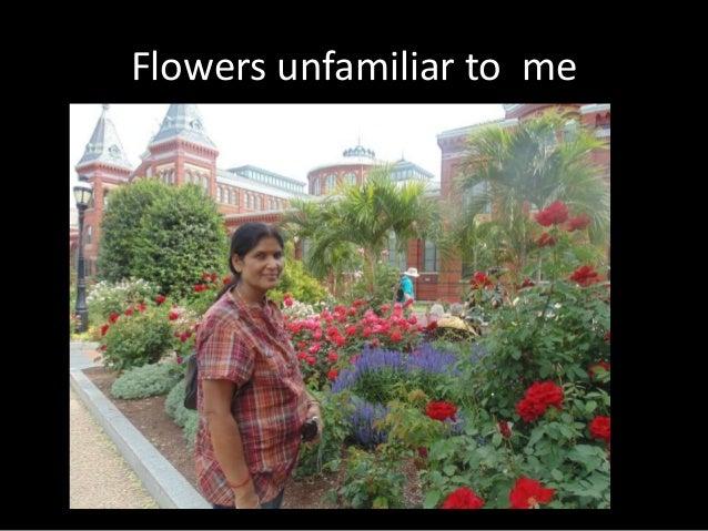 Flowers  unfamiliar to  me came familiar