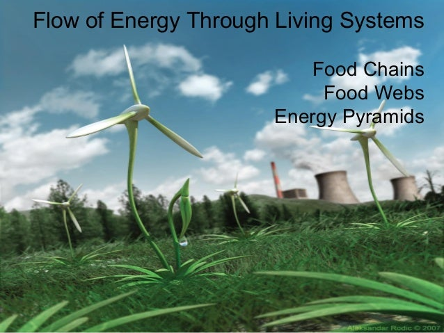 Flow of Energy Through Living Systems Food Chains Food Webs Energy Pyramids