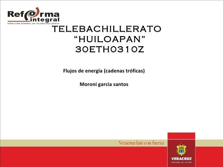 "TELEBACHILLERATO  ""HUILOAPAN"" 30ETH0310Z Flujos de energía (cadenas tróficas) Moroni garcia santos"