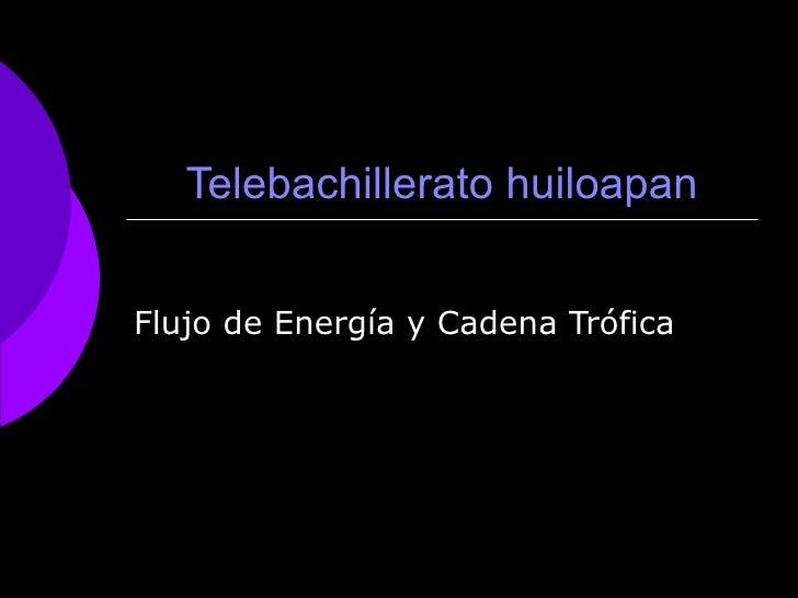 Flujo De EnergíA Y Cadena TróFica   Hector