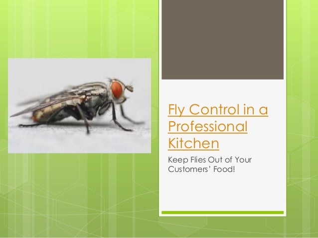 Fly Control in a Professional Kitchen Keep Flies Out of Your Customers' Food!