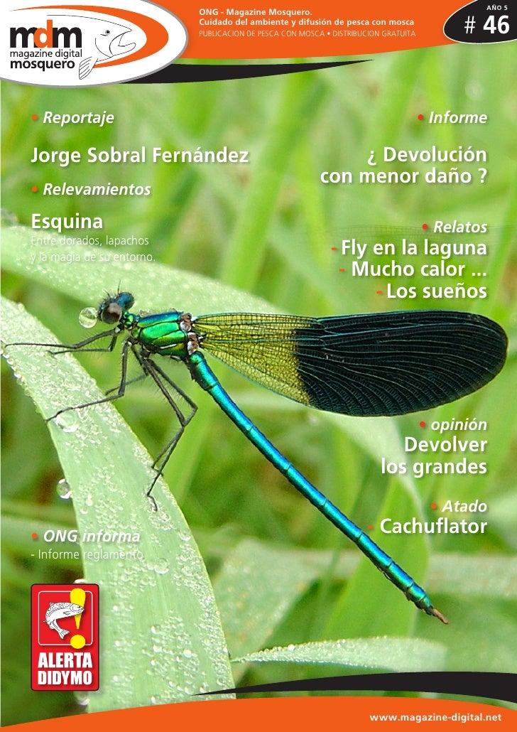 AÑO 5                            ONG - Magazine Mosquero.                            Cuidado del ambiente y difusión de pe...