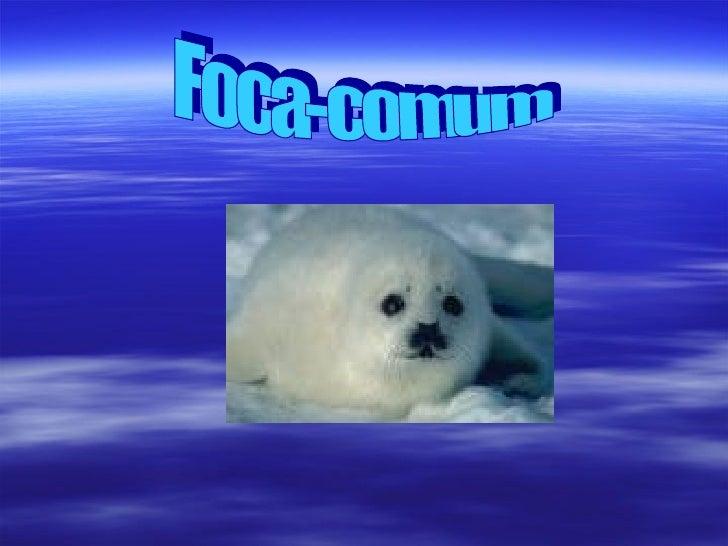  Habitat: Nas águas do Atlântico Norte.  Forma e revestimento do corpo: Forma fusiforme,   revestimento pêlo espesso.  ...