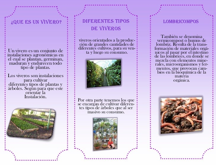Folleto lina for Conclusion de un vivero