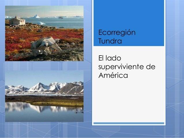 Ecorregión  Tundra  El lado  superviviente de  América