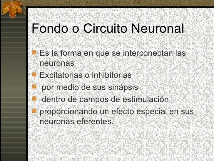Circuito Neuronal : Fondos y circuitos neuronales