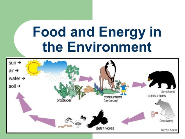 Food and energy in the environment