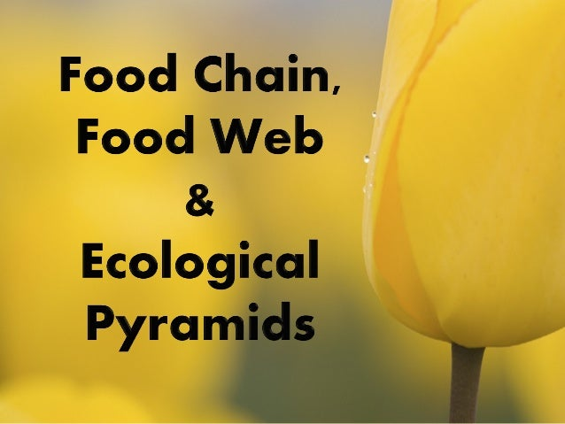 essay about food chain and food web [pewslideshow slidename=anim2] part 1: provide an example of a food chain in the area where you live humans are parts of food chains and food webs, too.