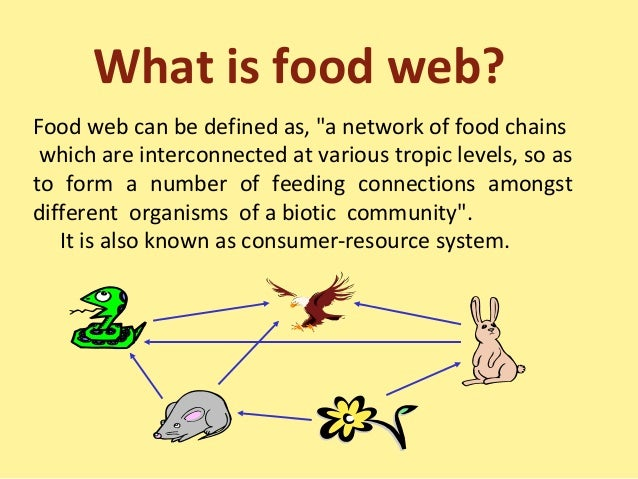 Food Chains, Food Web and Ecological Pyramids
