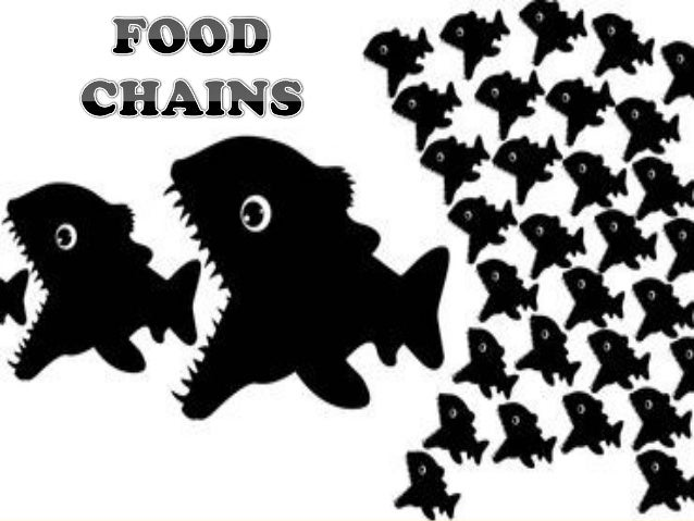 Food chain questions for my essay?