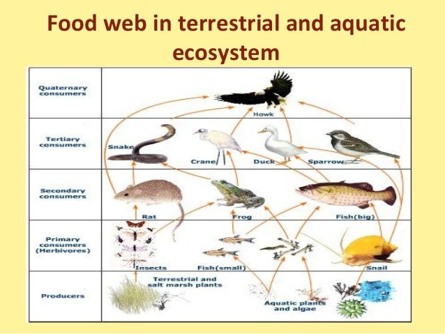 importance of herbivore foraging in terrestrial 1720 go with the fl ow: water velocity regulates herbivore foraging decisions in river catchments kevin a wood , richard a stillman , dave wheeler , steve groves , catherine hambly.