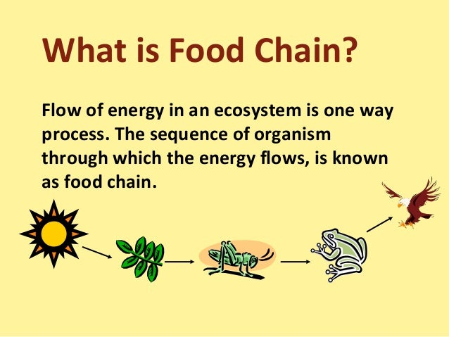 Example Organic Food a Food Chain Each Organism