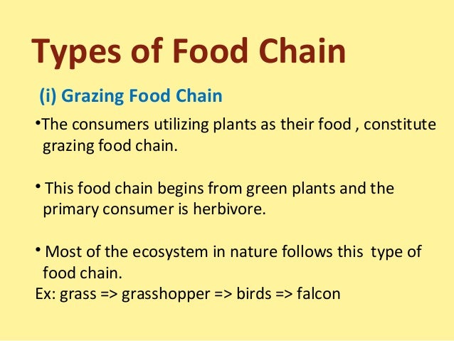 Pin Food Chains Definitions On Pinterest