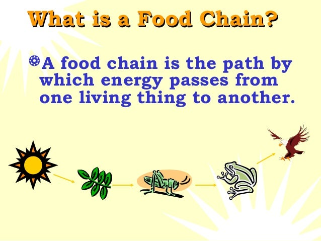 About Food Chain