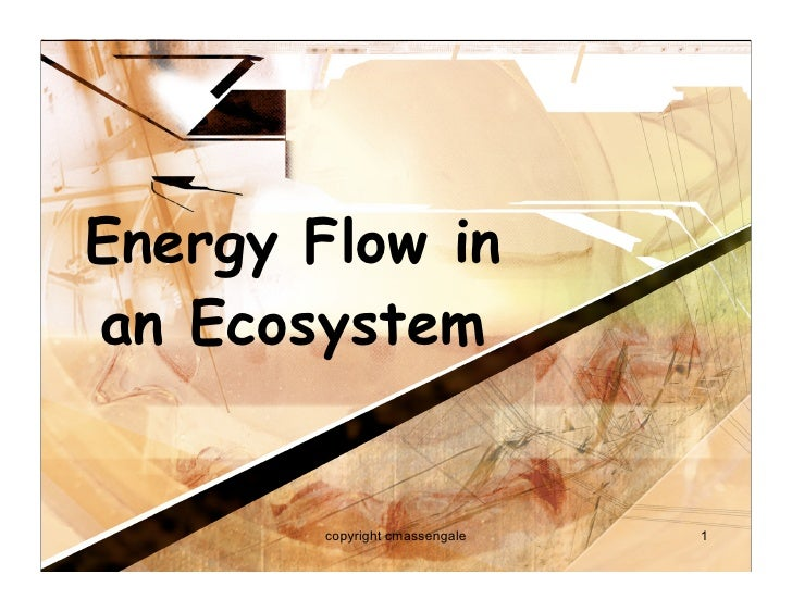Energy Flow in an Ecosystem           copyright cmassengale   1