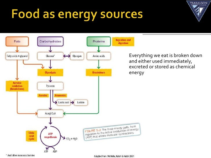Food fuels and the three energy systems