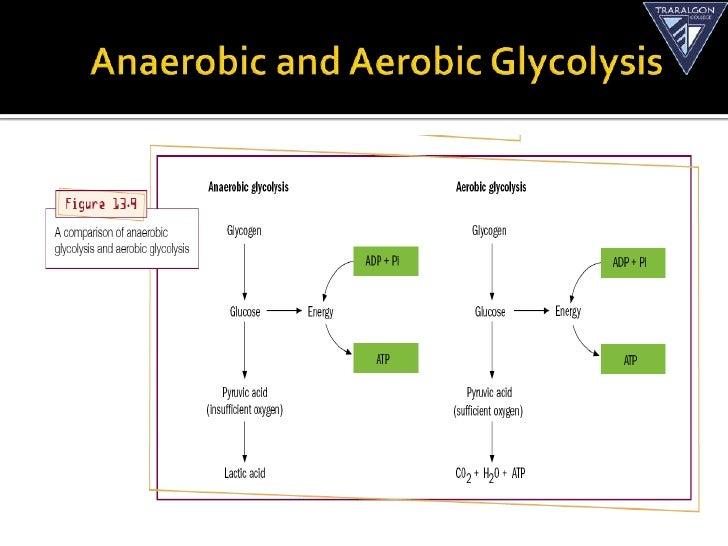 Glycolysis  All Steps with Diagram Enzymes Products