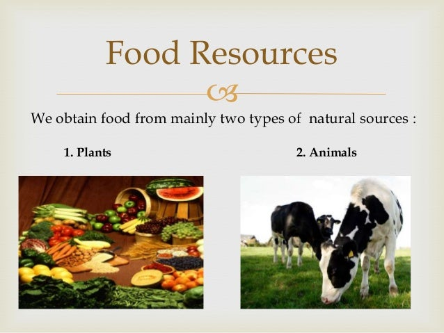 Food resources for Cuisine resources