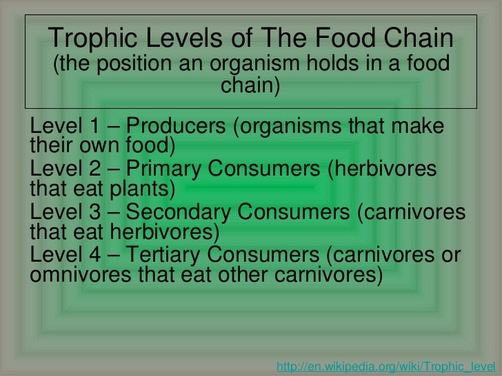Food chain worksheet for high school