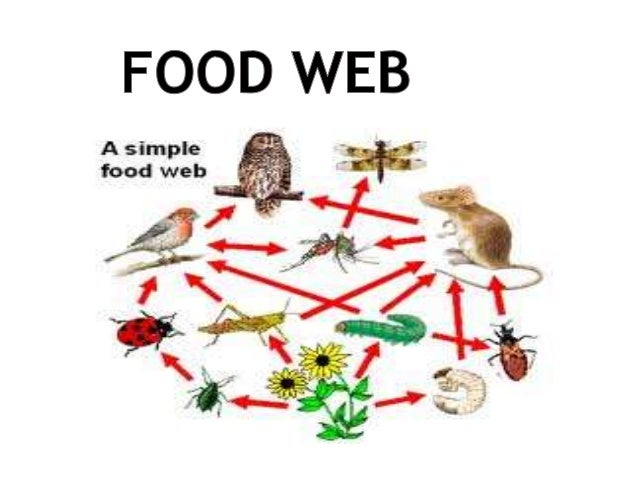 food chain of black rhino Explain role of rhinos in food chainpdf free download here grade 11 marks 80 - life sciences 4 all remember that the number of black rhinos in.