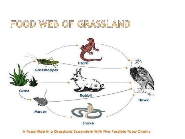 Soil Food Web New York