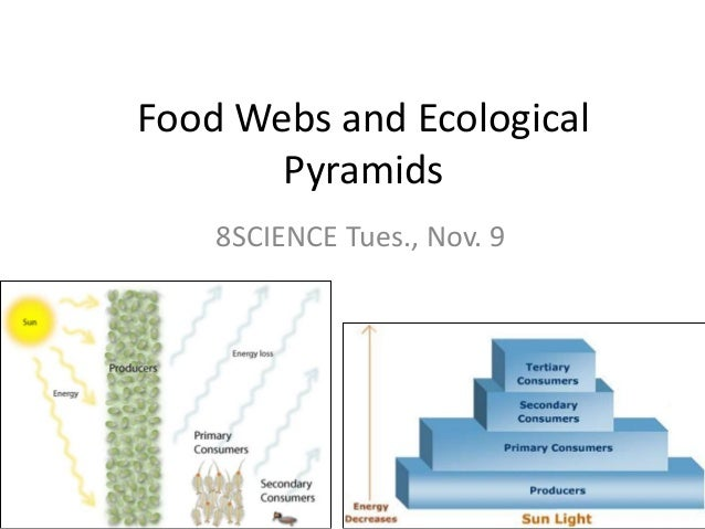 Food Webs and Ecological Pyramids 8SCIENCE Tues., Nov. 9
