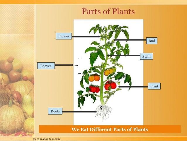 Environmental Science Evs Food We Eat Class I on Evs Plants Worksheet