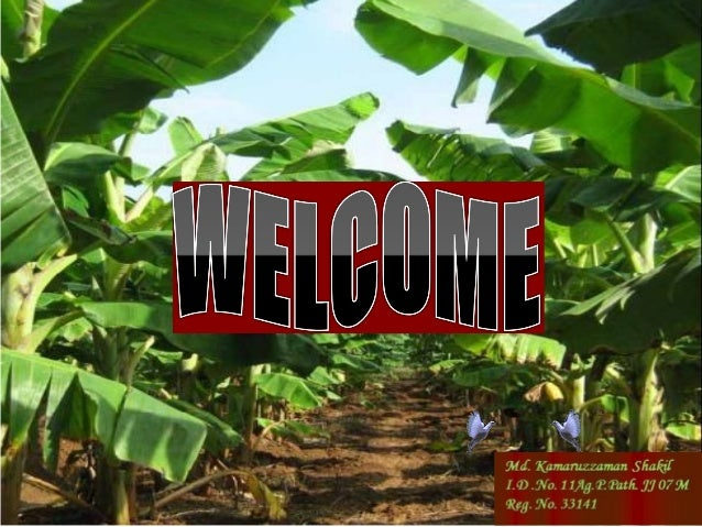 TitleDiscuss The Important Factors For    Forecasting and Prepare a Critical Weather Model For Wilt            of Banana