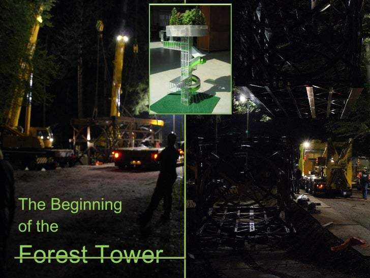 The Beginning  of the  Forest Tower