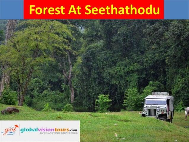 Forest at seethathodu