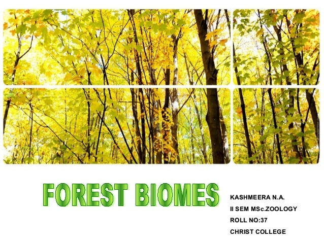 Forest biomes - Kashmeera