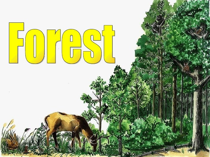 Forest inese