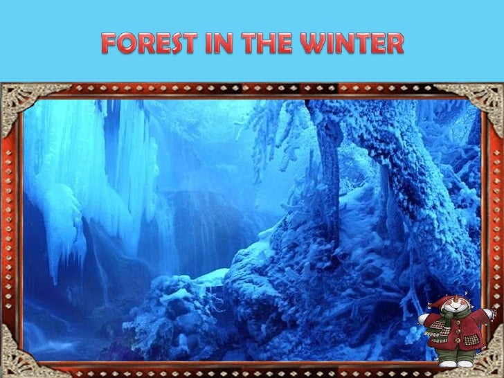 FOREST IN THE WINTER<br />