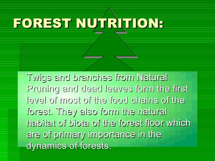 FOREST NUTRITION: <ul><li>Twigs and branches from Natural Pruning and dead leaves form the first level of most of the food...