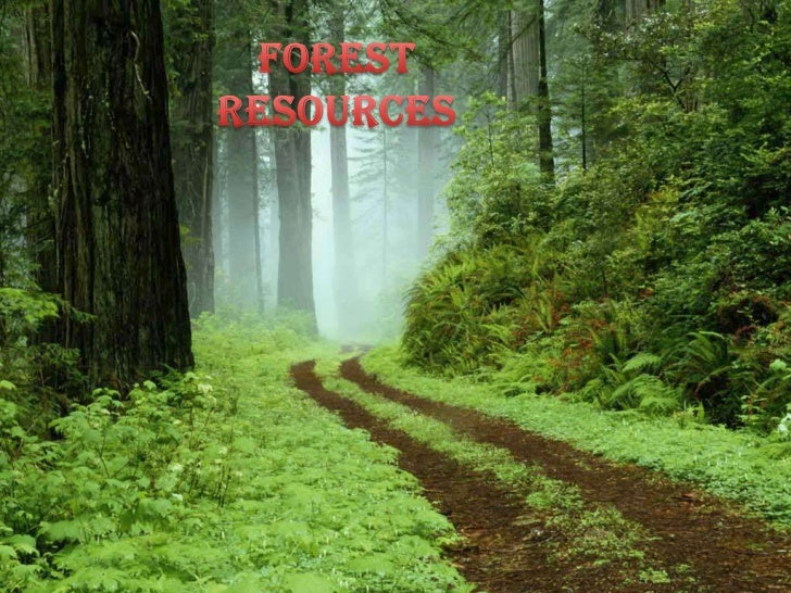 FOREST RESOURCES <br />