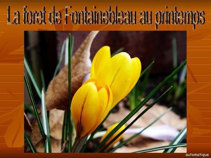 La foret de Fontainebleau au printemps automatique