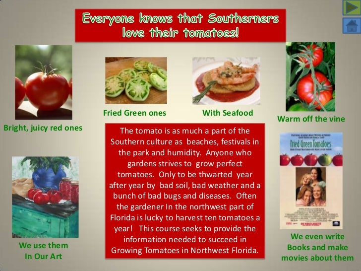 Everyone knows that Southerners <br />love their tomatoes!<br />Fried Green ones<br />With Seafood<br />Warm off the vine ...