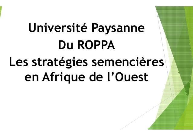 Université Paysanne Du ROPPA Les stratégies semencièresLes stratégies semencières en Afrique de l'Ouest Université Paysann...