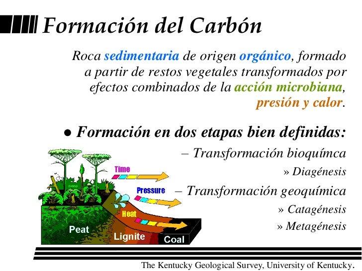 Resultado de imagen de El proceso de formación del carbón a partir de vegetales