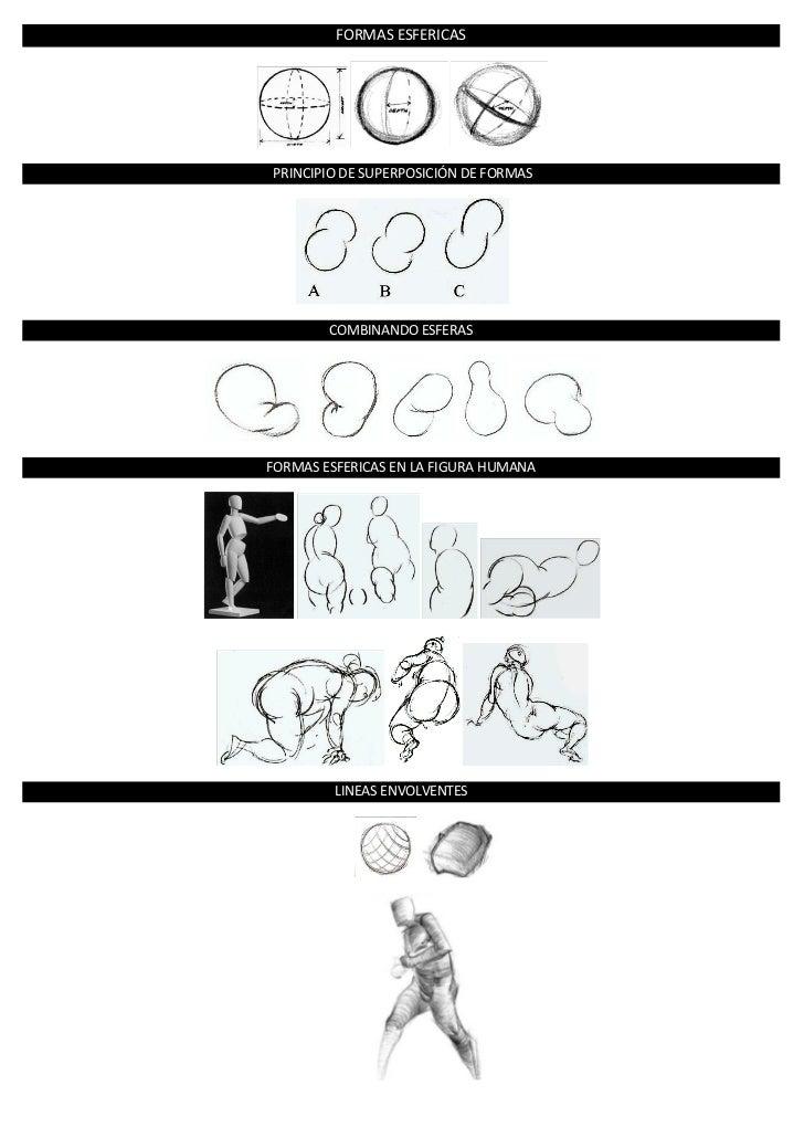 Formas basicas en la figura humana
