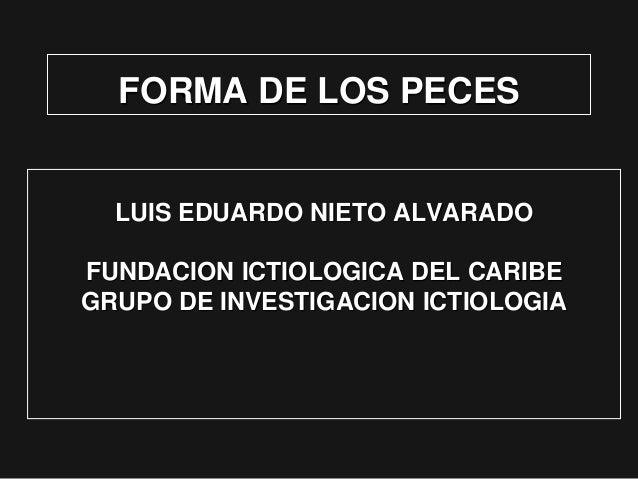 FORMA DE LOS PECES LUIS EDUARDO NIETO ALVARADO FUNDACION ICTIOLOGICA DEL CARIBE GRUPO DE INVESTIGACION ICTIOLOGIA