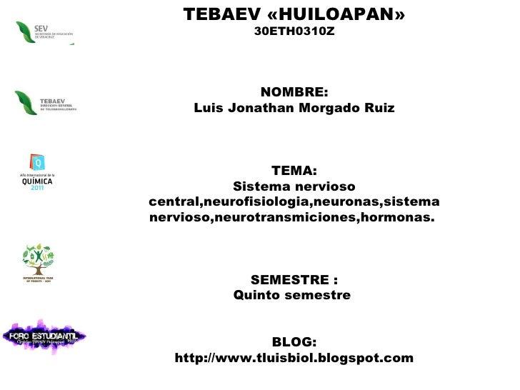 TEBAEV «HUILOAPAN» 30ETH0310Z NOMBRE: Luis Jonathan Morgado Ruiz TEMA: Sistema nervioso central,neurofisiologia,neuronas,s...