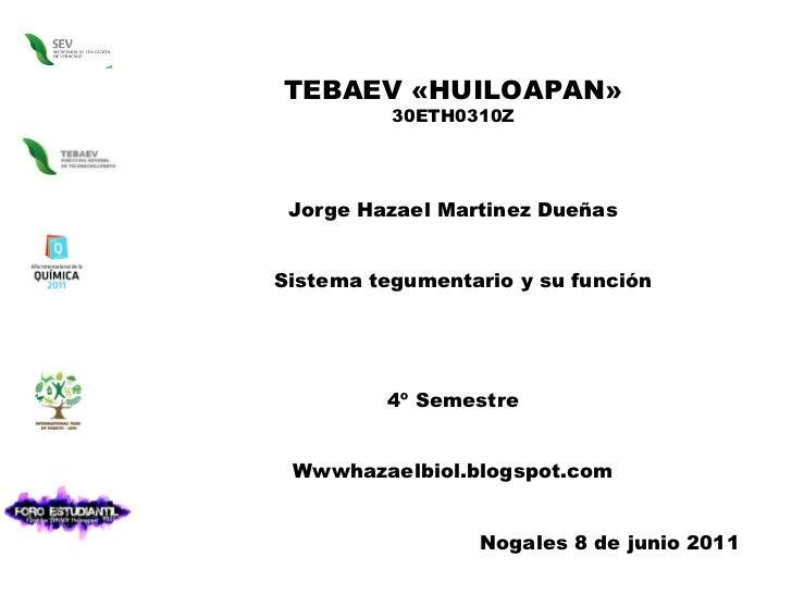 TEBAEV «HUILOAPAN» 30ETH0310Z Jorge Hazael Martinez Dueñas Sistema tegumentario y su función 4º Semestre Wwwhazaelbiol.blo...