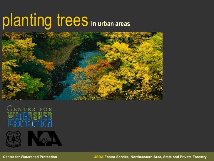 planting trees   in urban areas