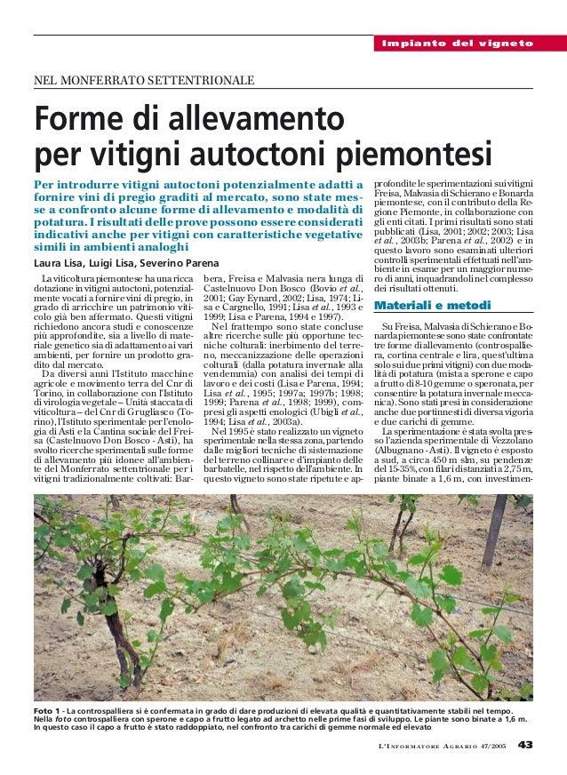 Forme di allevamento per vitigni piemontesi