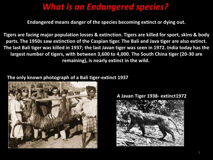 1<br />What is an Endangered species?Endangered means danger of the species becoming extinct or dying out.Tigers are faci...