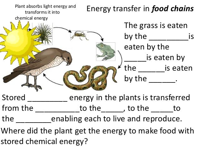 Food Chain Worksheet 4th Grade - Pichaglobal